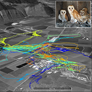 Applying Data Science Approaches for Processing High-Resolution Animal Movement Data and Segmenting Trajectories into Behavioral Modes