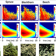 Echo-based 3D reconstruction of natural environments using machine learning